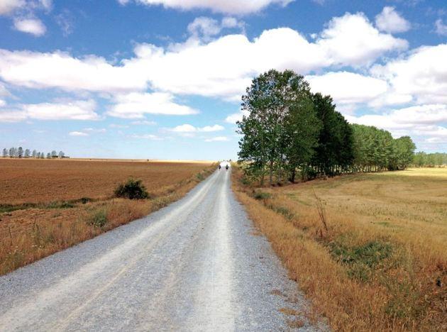 Camino Landscape